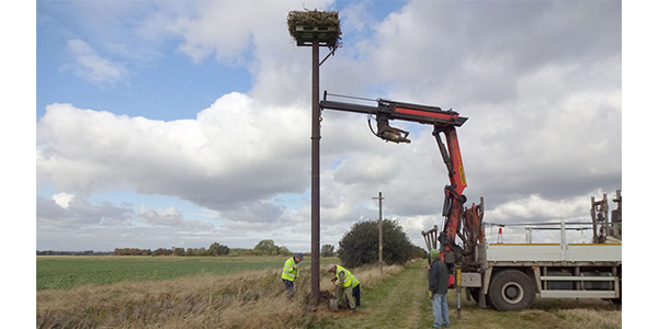 Pallets support osprey-breeding project