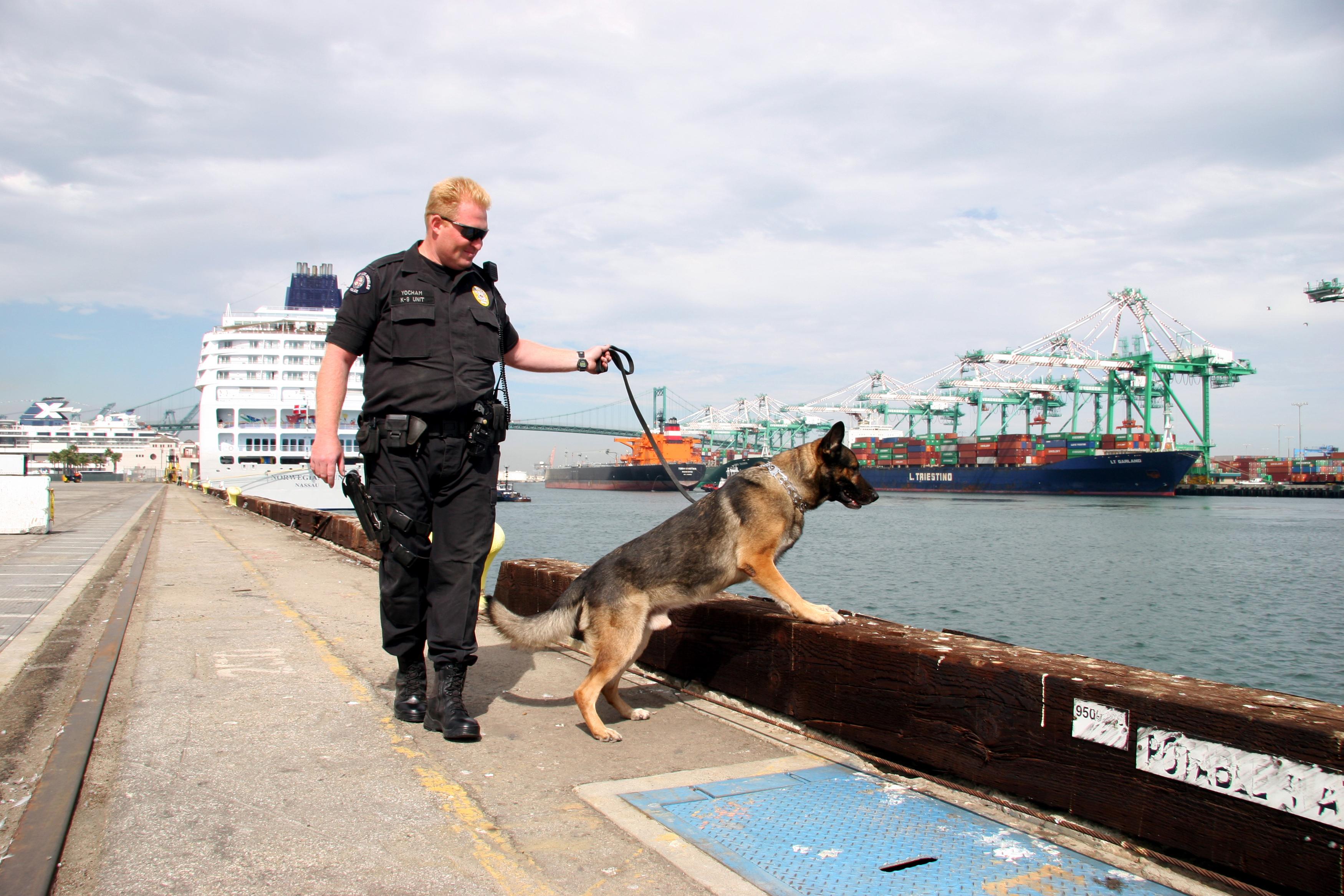 Port police bomb dog
