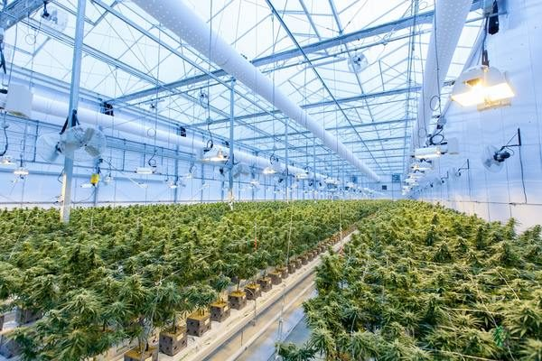 "CargoChain and FileVision Launch CropWise — ""Seed-to-Sale"" Visibility Tracker for Cannabis"
